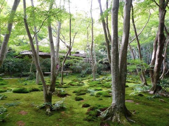 Jard n picture of gio ji temple kyoto tripadvisor for Jardin kyoto
