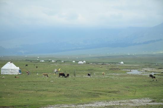 Tacheng, China: パオの点在する草原