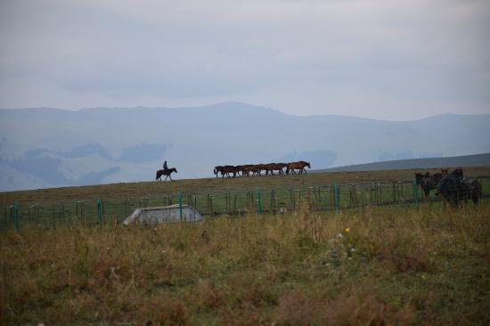 Tacheng, China: 草原を行く馬の群れ
