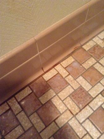 Econo Lodge: Pooled blood in the grout