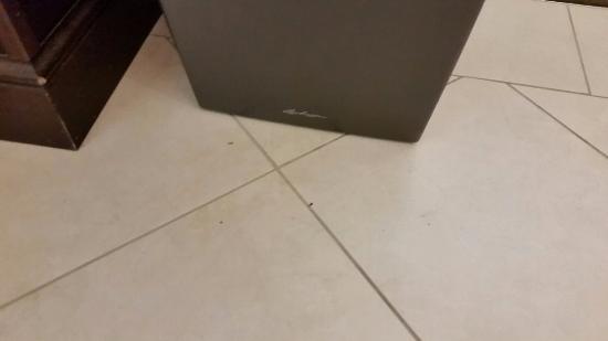 Hilton Garden Inn St Louis Airport: dirty floors