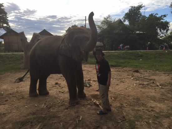 Rich, Roxy and Chaatmanee - Picture of Elephantstay ...