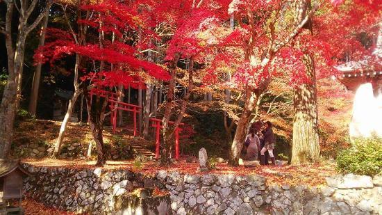 Sasayama, Japão: 真っ赤!
