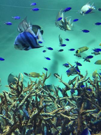 南国 - Picture of Tokyo Sea Life Park, Edogawa - TripAdvisor