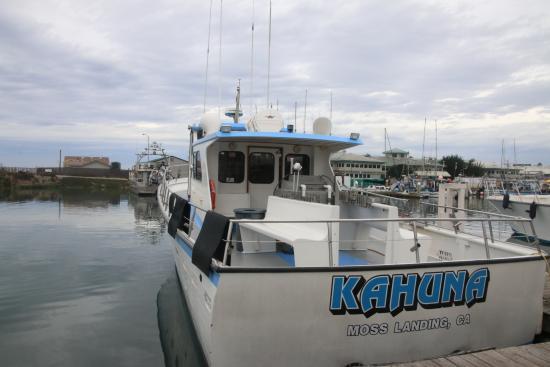 Kahuna Whale Watching
