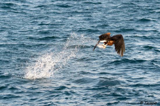 Danforth Yachting: musafa sundowner with fish eagle
