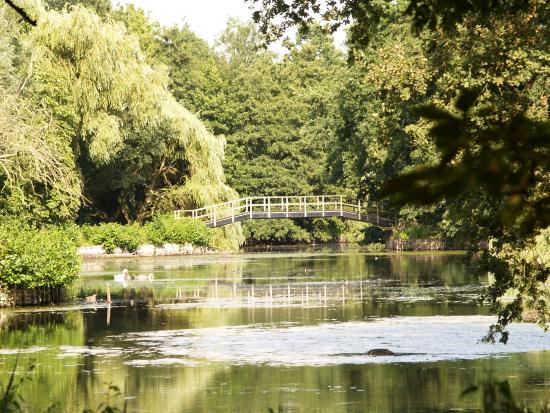 Rivierenhof : Veel waterpartijen in het park