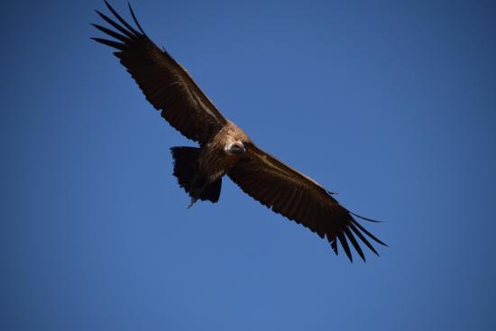 Nalepo Mara Camp: Raptor