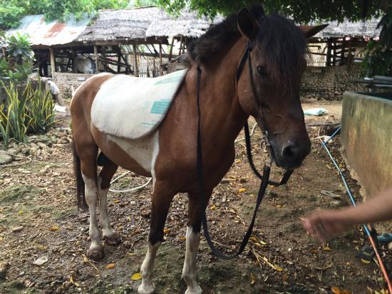 Boracay Horse Riding Stables: photo4.jpg