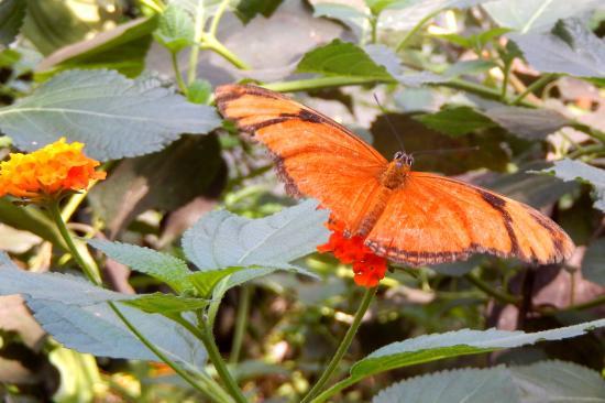 De Passiflorahoeve