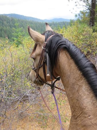 Greenhorn Creek Guest Ranch: Scenic ride
