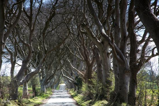 Ballymoney, UK: Dark Hedges
