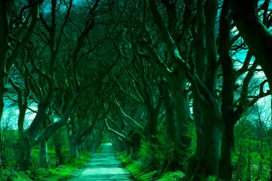 ‪‪Ballymoney‬, UK: Dark Hedges‬