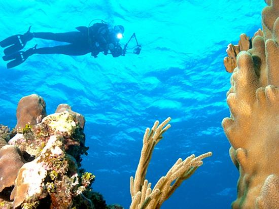 Cayman Brac Beach Resort: Day of Diving