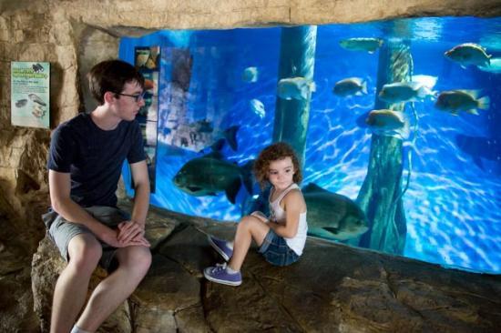 Sa Zoo Picture Of San Antonio Zoo San Antonio Tripadvisor