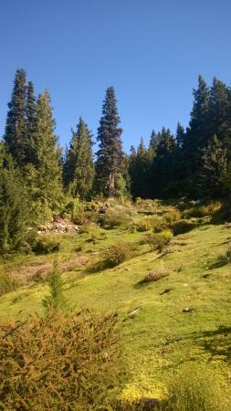 Ohme Gardens: Green and beautiful