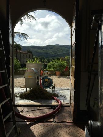 Castiglion Fiorentino, Italia: Harvest