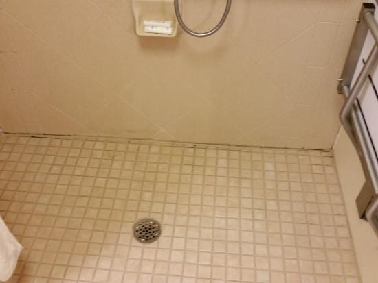 Homewood Suites by Hilton - Greenville: Mold on floor