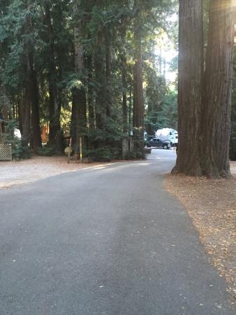Cotillion Gardens RV Park: Photo3