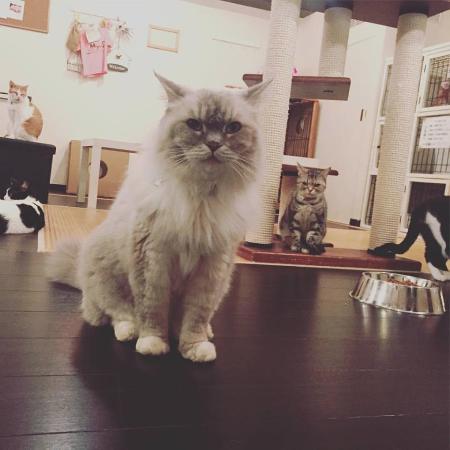 Cat Cafe Miysis