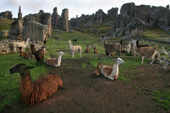 Cerro de Pasco, Peru: Bosque de piedras de Huayllay las 7 llaves