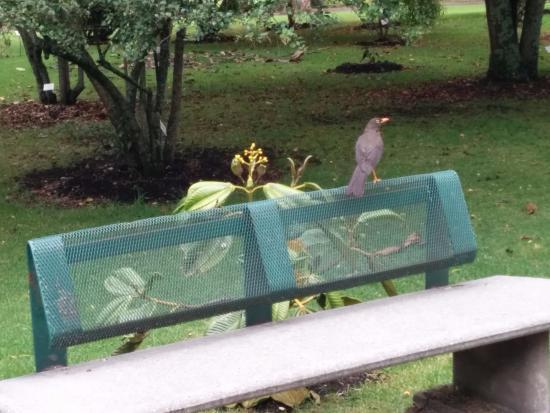 Ave En El Jard N Picture Of Jardin Botanico De Bogota
