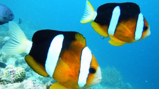 Aquaworld Diving Center