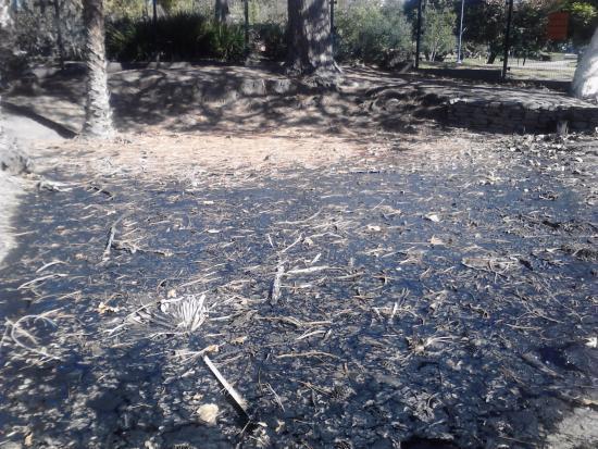 a history and the geology of la brea tar pits in california The rancho la brea tar pit fossil collection includes juniperus (c3)  la brea:  a record of pleistocene life in california (natural history.