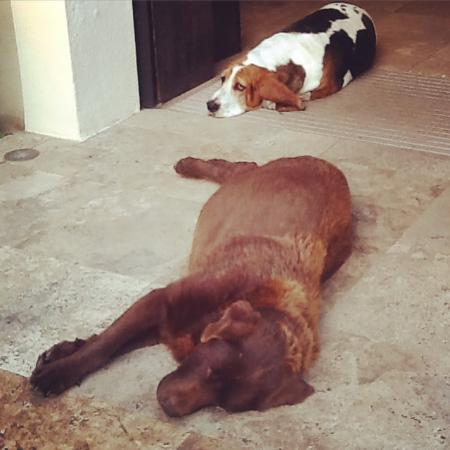 Hotel Montmorency: Hotel dogs
