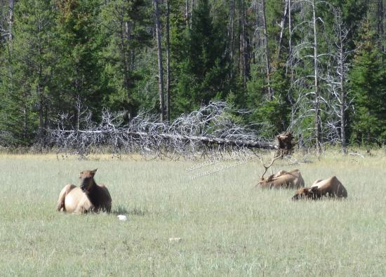 Jasper Motorcycle Tours Day Tours: Many of Wildlife we seen