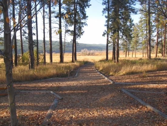 Elizabeth Lake Lodge: path to the bird sanctuary serene and peaceful