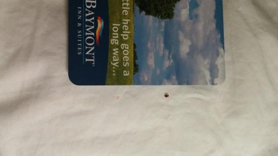 Baymont Inn & Suites Iowa City / Coralville: This is the bed bug I killed in Room 128.