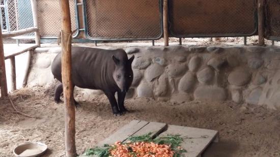 Parque Zoologico Huachipa Lima Lo Que Se Debe Saber Antes De Viajar Tripadvisor La inspección, a cargo fiscalizadores de la subgerencia de control, operaciones y sanciones de ate, constató que el establecimiento no. parque zoologico huachipa lima lo
