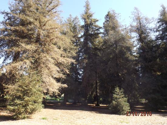 Carbon Canyon Park: The redwood grove