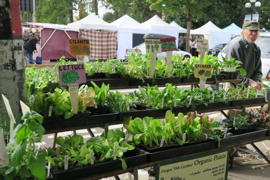 Eugene, Oregon: plants and herbs