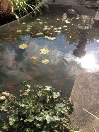 Glenthurston Self-Catering Apartments: pond
