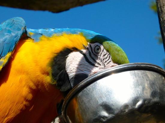 Birdland: My feeding time is all day.