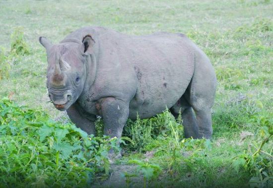 Wildlife Safari Exploreans Day Trips: Rhino