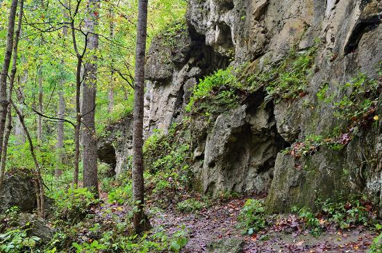 Falls Ridge Preserve : Travertine Cliffs