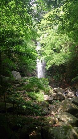 Shirafuji Falls: 滝