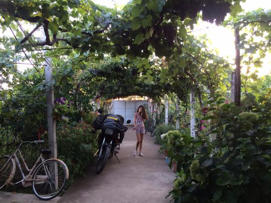 Florian Shkodra Guesthouse and Hostel: Grapevine