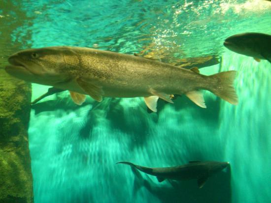 Teradomari Aquarium: Рыба