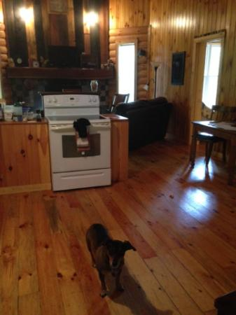 Springwood Cabins: Duncan loves Butterfly Trails cabin!