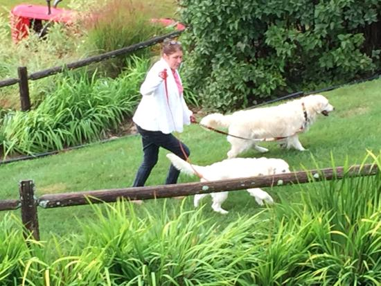 Bristol, Nueva Hampshire: Sondra walking Shandy and Sadie