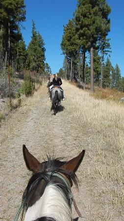 Averill's Flathead Lake Lodge: My horse Inca on the trail ride back from the chuck wagon lunch
