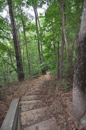 Base of the Falls Trail: sentier de randonnée