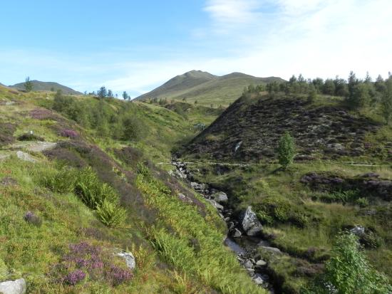 Lawers, UK: Beinn Ghlas from Nature Reserve