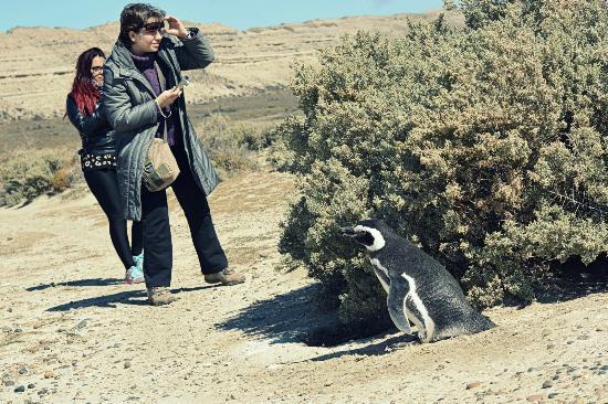 Punta Ninfas, Argentinien: Caminata entre Pinguïnos de magallanes en la reserva El Pedral