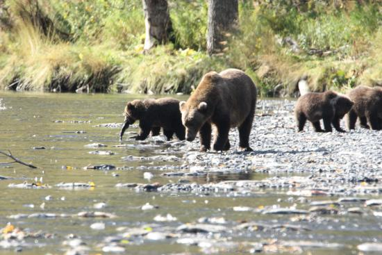 Munsey's Bear Camp: Our bear family