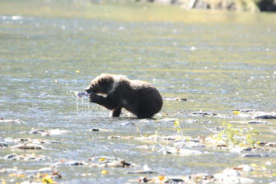 Munsey's Bear Camp: Bear cub with fish